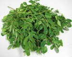 Moringa_leaves_1_2009