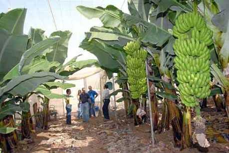 agroecologia11