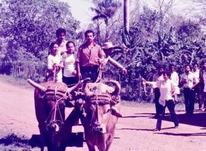 Maduro-mecanismos-de-traccion-animal