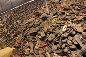 auschwitz-shoe-pile