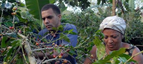 CUBA-ALCANZÓ SANTIAGO EL MILLON DE LATAS DE CAFÉ